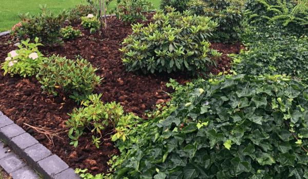 Beskæring af buske lige efter din smag