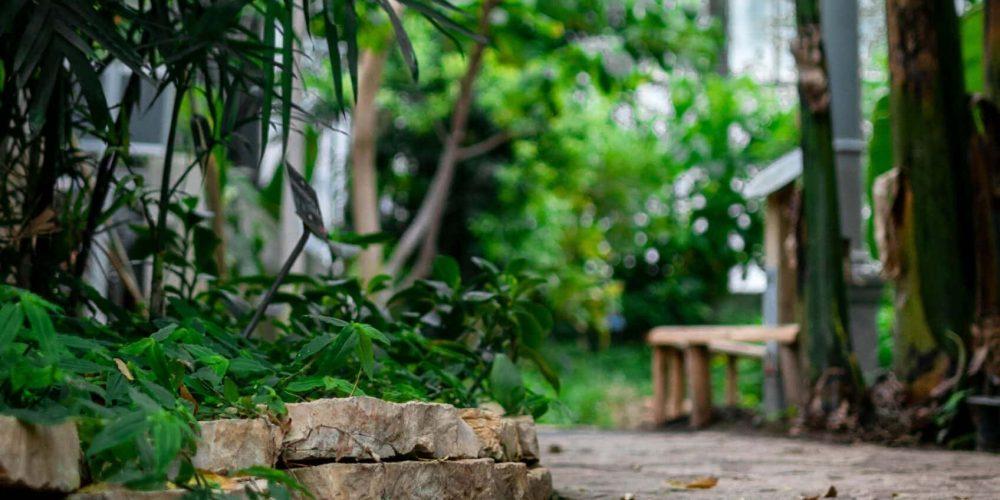 Blog om at holde haven pæn